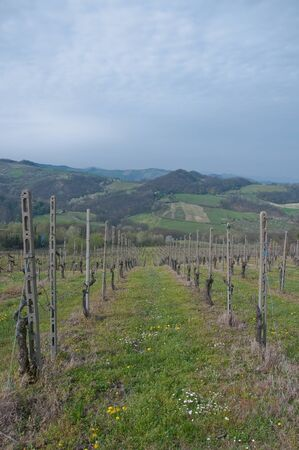 the po valley: pinot noir vineyard located Oltrepo Pavese,italy