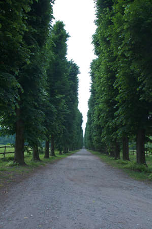 earth road: beautiful tree-lined avenue with earth road