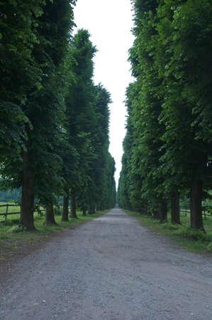 treelined: beautiful tree-lined avenue with earth road
