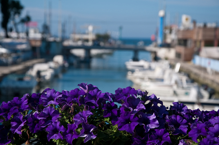 view of dock with boats located in Riccione on the Adriatic coast