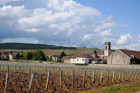 bordeaux region: the beautiful vineyards in beaune cote de beaune where wine is produced , france