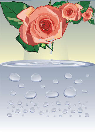Rose and drops. Vector Vector