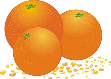Three oranges. Vector