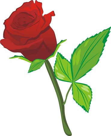 Red rose on the white background. Vector Stock Vector - 4539548
