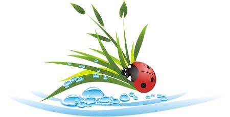 Grass, drops and ladybird. Vector Vector