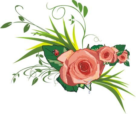Roses, grass and ladybird. Vector Stock Vector - 5131790