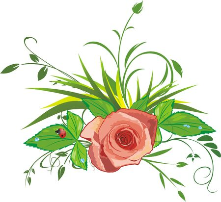 Rose, grass and ladybird. Vector Stock Vector - 5131782