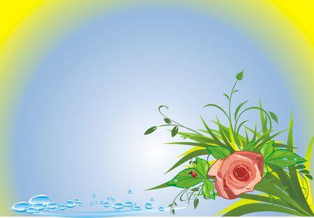 Rose, grass, drops and ladybird. Summer composition. Vector Vector
