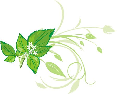 Mint sprig with floral ornament. Vector