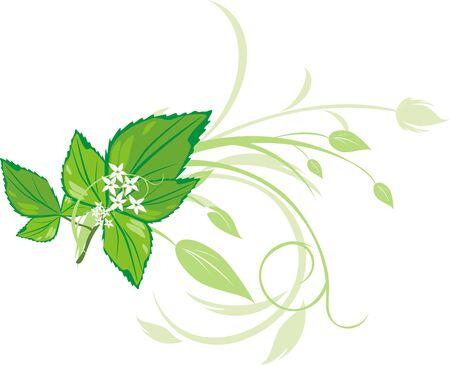 menta: Ramita de menta con ornamentos florales. Vector