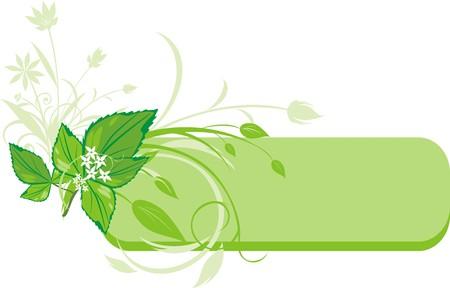 raminho: Mint sprig. Decorative banner. Vector