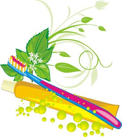 a sprig: Una ramita de hierbabuena, gotas, cepillo de dientes y pasta. Vector Vectores