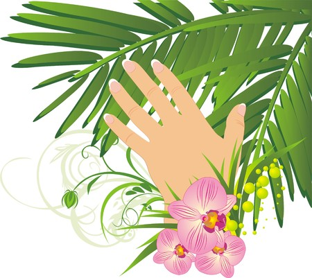 french manicure: Womanish hand and branch of palm. Vector