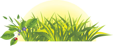 Grass and flowers with ladybird. Sunrise. Vector Vector