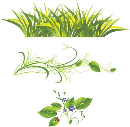 a sprig: Ramita con flores, hierba y ladybird. Tres composiciones aisladas.