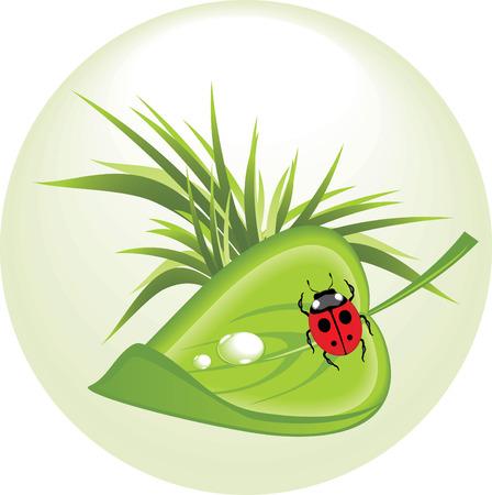 creeps: Hoja con ladybird. Concepto de primavera.