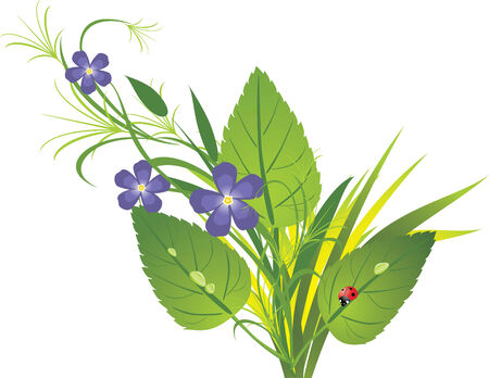 Bouquet of flowers and grass with ladybird. Spring composition.  Stock Vector - 6462450