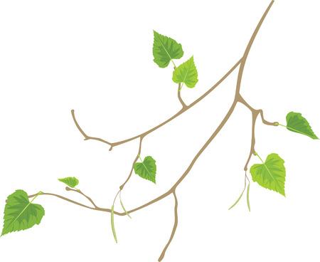 decorative item: Sprig of birch