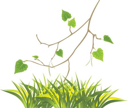 a sprig: Grass and sprig of birch