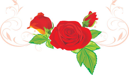 Three red roses with ornament Stock Vector - 8613257