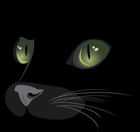 dark eyes: Muzzle of black cat