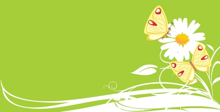 Chamomile and butterflies. Decorative banner Vector