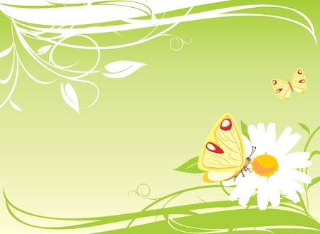 Chamomile and butterflies on the floral background Stock Vector - 9532822