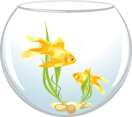 algae: Two goldfishes in the aquarium Illustration