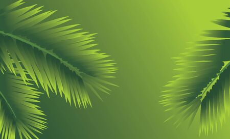 Branches of palm. Abstract background Stock Vector - 9628741
