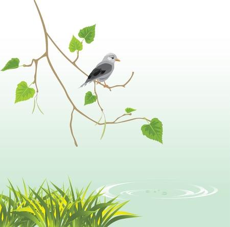 green jay: Jay en el riverside