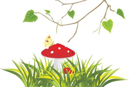 toadstool: Amanita muscaria funghi in erba e betulla rametto