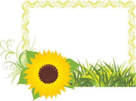 sunflower seeds: Sunflower with grass in the decorative frame