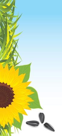 pips: Zonnebloem met gras en pitten. Banier Stock Illustratie