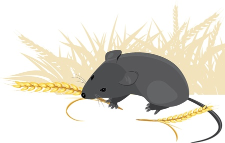 Field mouse with wheat ears Stock Vector - 9932763