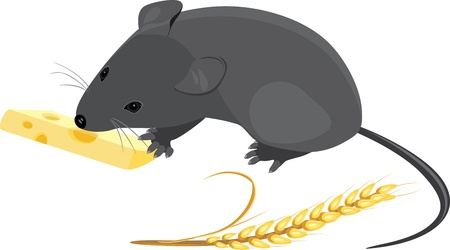 Field mouse with wheat ear and piece of cheese Vector