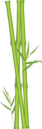 Green bamboo Stock Vector - 9998989