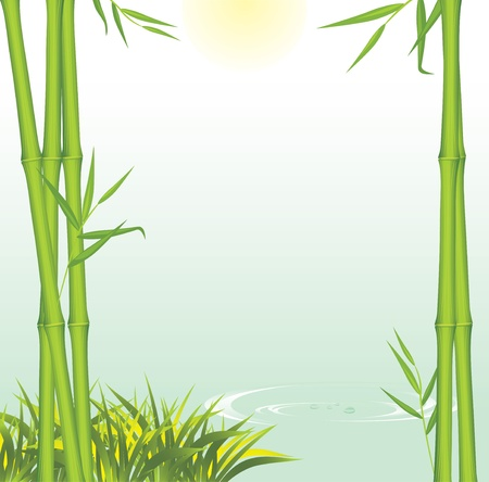 Green bamboo growing at shore of the river Vector