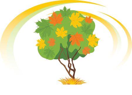 seasonal forest: Autumn maple tree Illustration