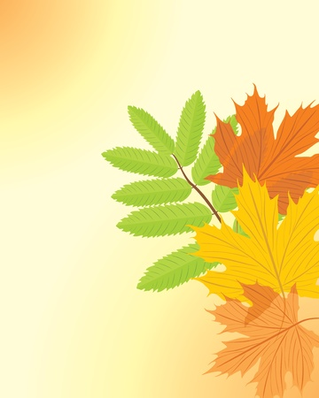 seasonal forest: Autumn maple and ash leaves