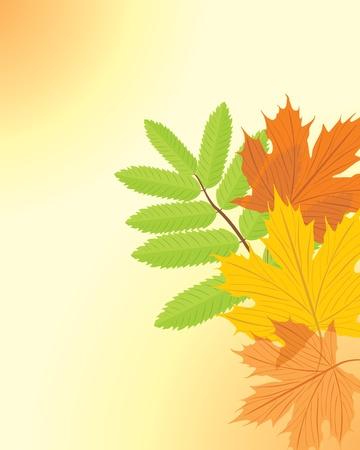 ash: Autumn maple and ash leaves