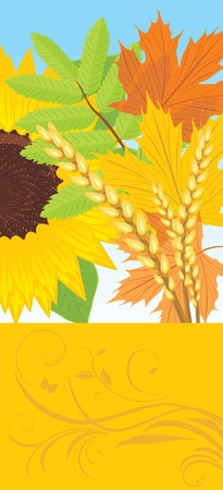Abstract autumn banner with leaves, sunflower and wheat ears Vector