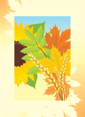 Autumn frame with leaves, sunflower and wheat ears Vector
