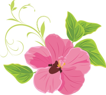 Pink flower isolated on the white