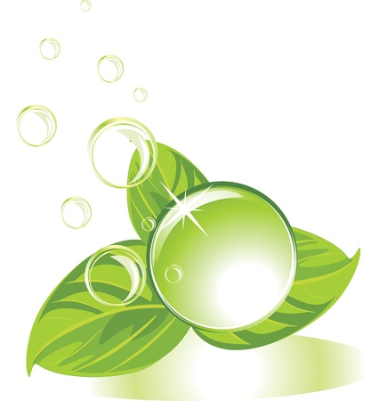 Drop with leaves and bubbles Stock Vector - 10782729