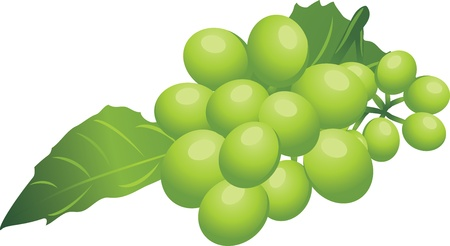 Sprig of green grape Stock Vector - 10982504