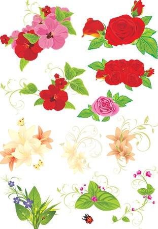 beautiful red hibiscus flower: Colecci�n de flores diferentes aislados en el blanco