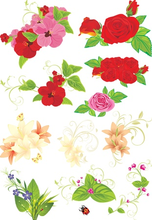 Different flower collection isolated on the white Vector