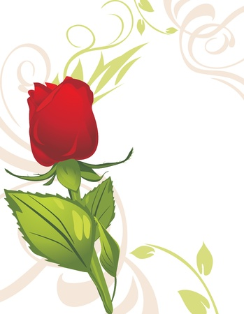 Red rose on the decorative background Vectores