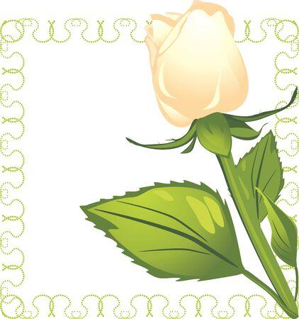 cenefas flores: Rosa blanca en el marco decorativo Vectores