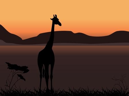 Giraffe on a background of sunset Vector